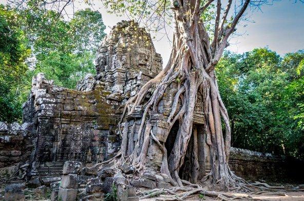 מקדש טה פרום, אשר שורשי העצים מתפתלים ביו קירותיו