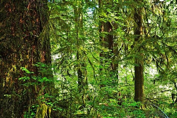 יער הגשם הו. צמחייה צפופה ואווירה מסתורית