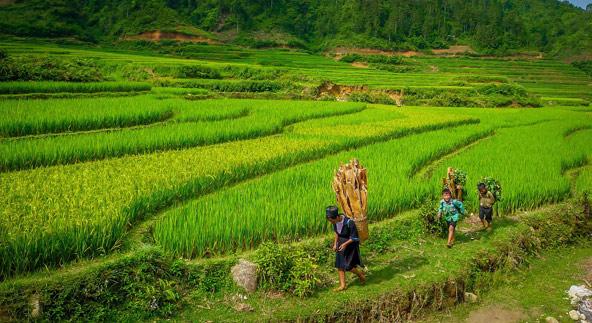 שדות האורז באזור סאפא בצפון וייטנאם | הצילומים בכתבה באדיבות Asiatica Travel