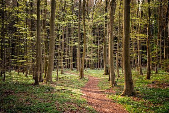 שביל הליכה באפר סור, אזור של טבע ירוק ויפהפה | באדיבות לשכת התיירות Visit Luxembourg