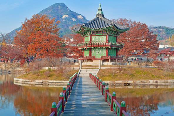 דרום קוריאה והאי ג'ג'ו – תרבות, חדשנות ופריחת הדובדבן