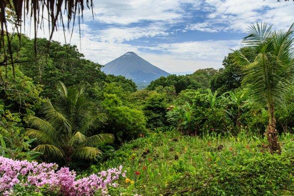 הר הגעש אומפטה, אשר סביבו צמחייה סבוכה