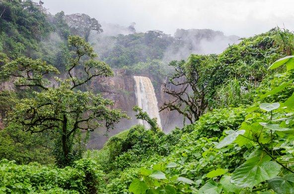 מפל בלבו של יער גשם בקמרון