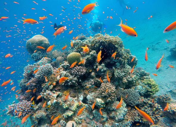 מנפלאות שונית האלמוגים של אילת