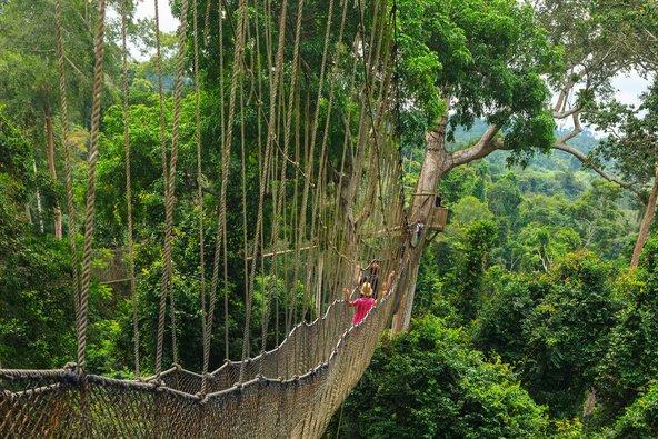גשר תלוי בלב יער הגשם בפארק קאקום בגאנה