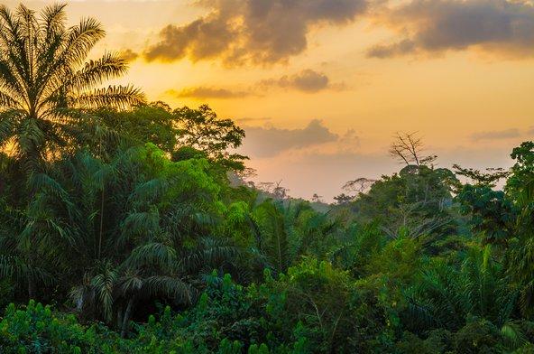 יער גשם סבוך בליבריה