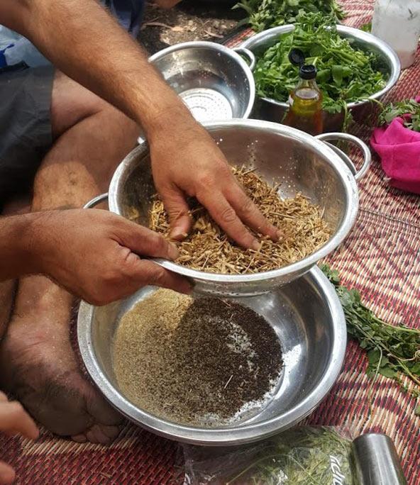 סינון תרמילי החרדל, השלב הראשון בהפקת חרדל ביתי | צילום: טל רז