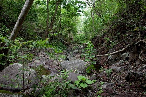 יער הגשם בשמורת מירפלור