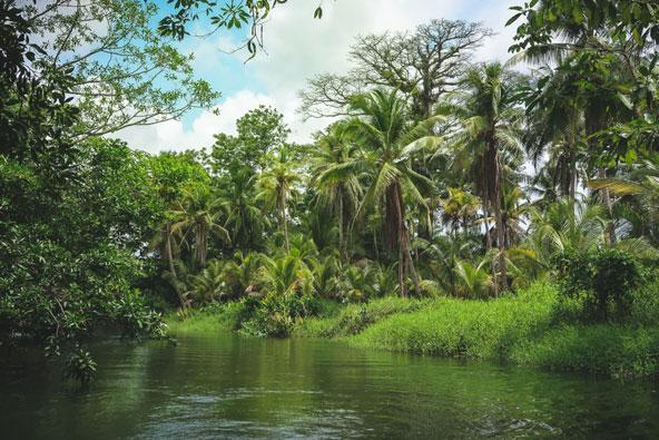 כ-40 אחוזים משטחה של פנמה מכוסים ביערות טרופיים