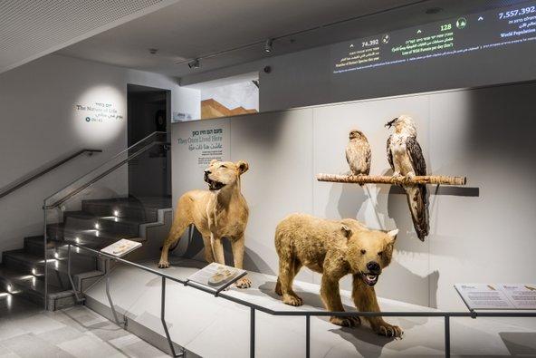 פוחלצים במוזיאון הטבע | צילום: איתי בנית