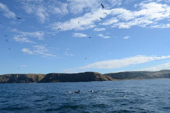 ציפורים מעל המים, דולפינים ולווייתנים בתוך המים | צילום: אופיר יהושפט