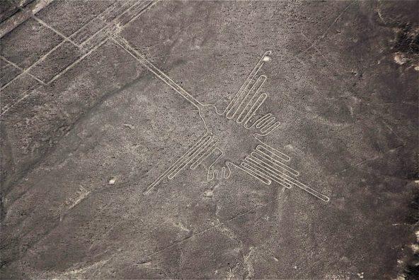 """צילום מטיסה מעל נאסקה: """"הקוליברי"""" (צופית)"""