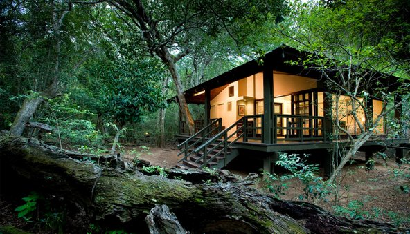 קוטג' בלב היער ב-Phinda Forest Lodge