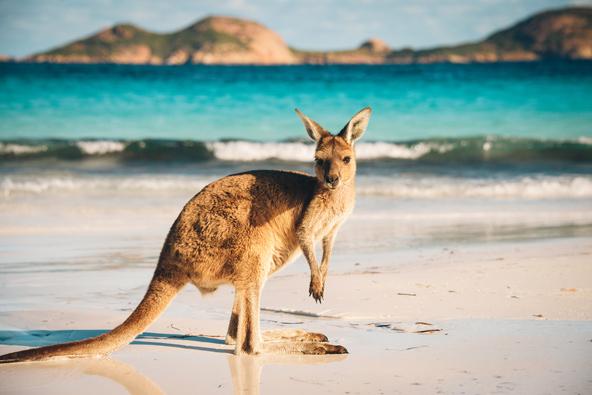 החידון הגיאוגרפי: אוסטרליה