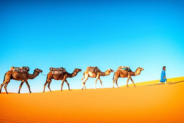 מסע סוסים למרוקו הקסומה