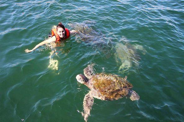 צבי ים ליד מנקורה