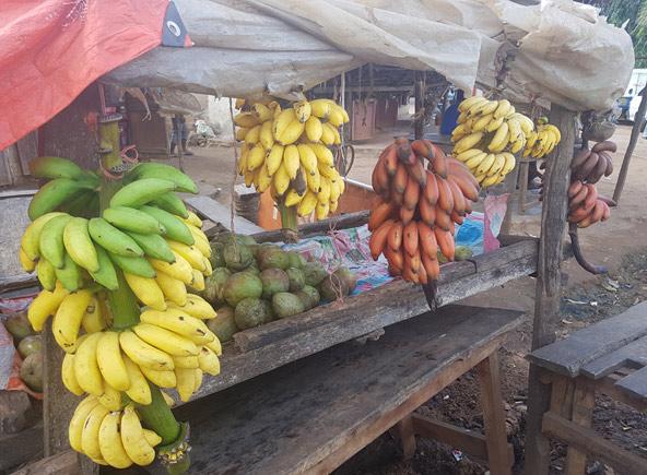 בננות בצבעים ובגדלים שונים בשוק המקומי בקמפלה