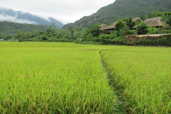 שדות האורז של מאי צ'או, צילום רותם בר כהן