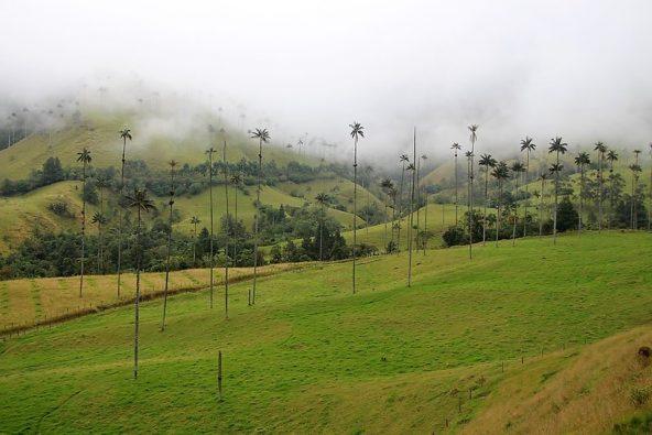 סלנטו נמצאת בלב חבל הקפה של קולומביה