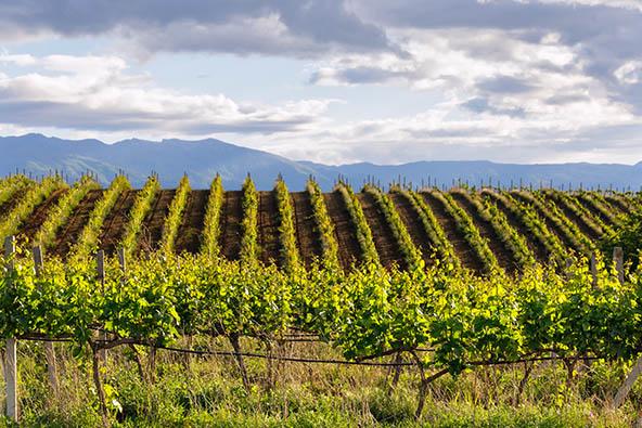 טיול יין בלקן 23-29.4