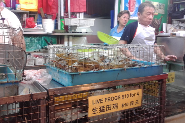 בשווקי האוכל של צ'יינה טאון אפשר למצוא הכל מכל, כולל צפרדעים ותנינים | צילום: טל רשף