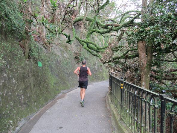 השביל המקיף את פסגת ויקטוריה עובר דרך צמחייה טרופית סבוכה