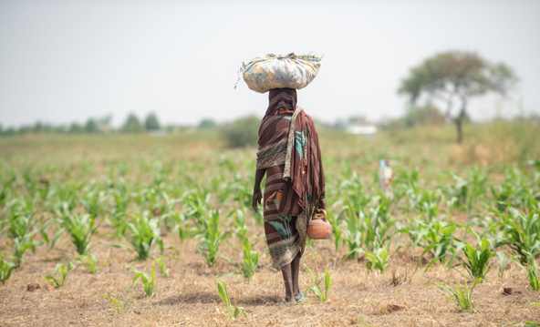 אישה בשדה באזור נג'מנה, בירת צ'אד