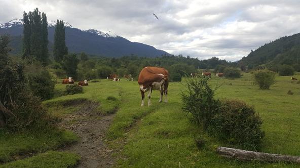זאת לא שווייץ, זאת צ'ילה! נוף פסטורלי בפטגוניה