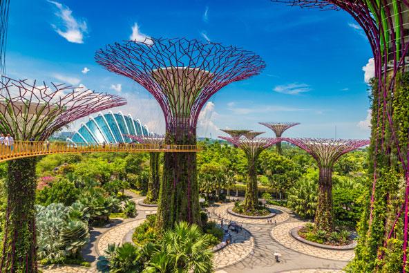 גרדנס ביי דה ביי בסינגפור. העצים המלאכותיים הם בעצם גנים אנכיים