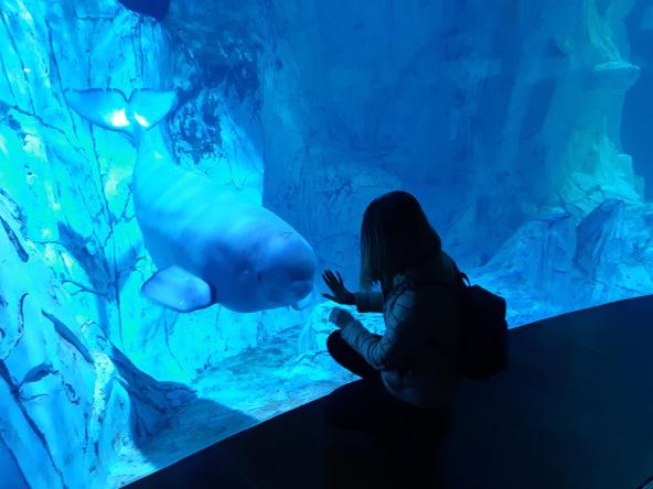 פגישה עם לוויתן בלוגה באוקיאנוגרפיק