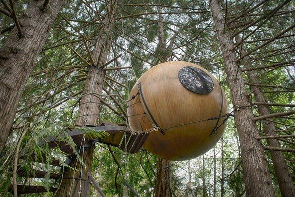 אחת הקפסולות התלויות בין ענפי העצים   צילום: Steven Olmstead Photography
