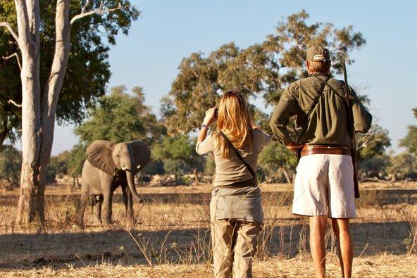 מפגש אינטימי עם חיות הבר במהלך ספארי רגלי בבריכות מאנה בזימבבואה   צילום: Claudio Soldi / Shutterstock.com