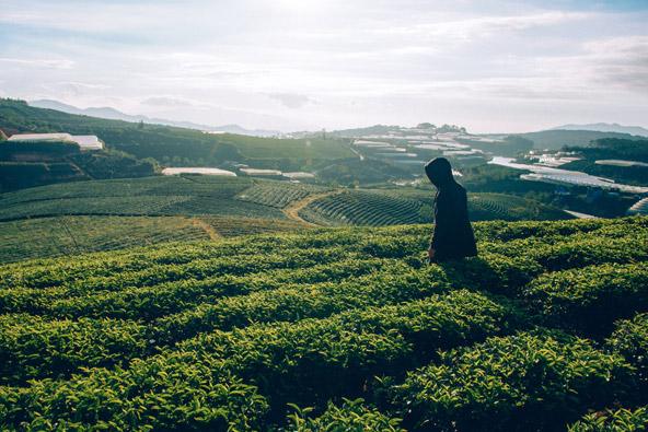 כל מה שרציתם לדעת על תה מאצ'ה