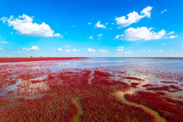 החוף האדום ליד פנג'ין, סין