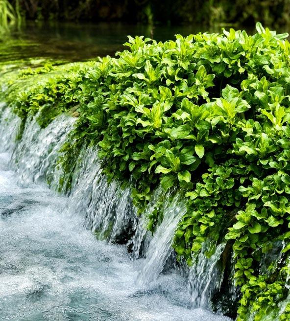צמחייה ומים בחורשת טל, המקום האידיאלי לפיקניק חורפי