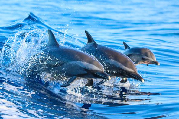 חידון יונקים ימיים