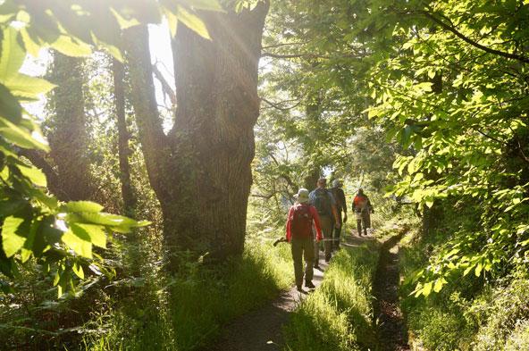 יער בהרי סיירה נוודה בספרד. טרק בקבוצה משלב אתגר, חברה, נוף וגם את החושים השונים