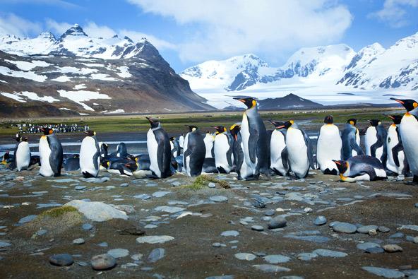 בניגוד למה שרבים חושבים, פינגווינים חיים רק בחצי הכדור הדרומי