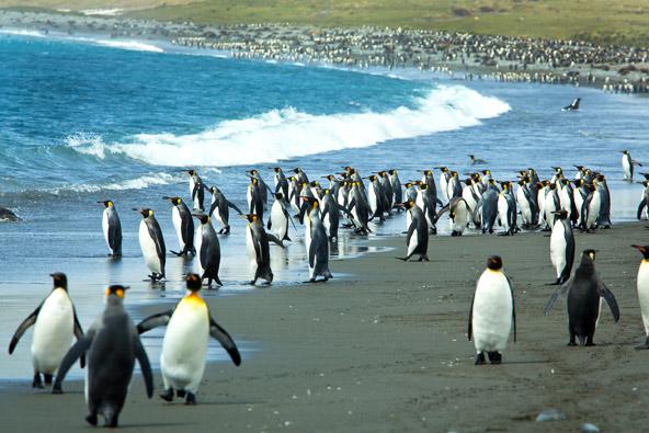 עם כל הכבוד לסרטי הטבע, דבר לא משתווה בעצמתו למפגש עם פינגווינים במציאות