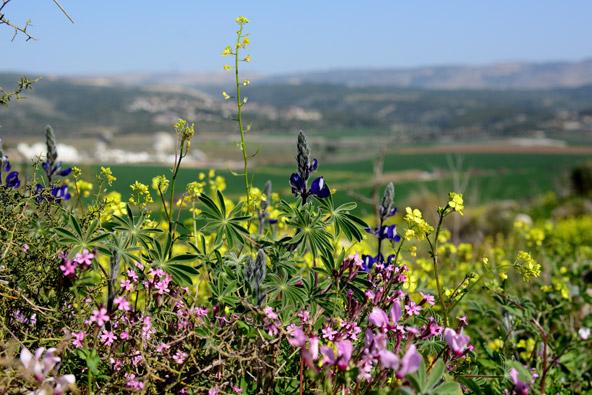 פריחות בעמק האלה, צילום איריס ריש