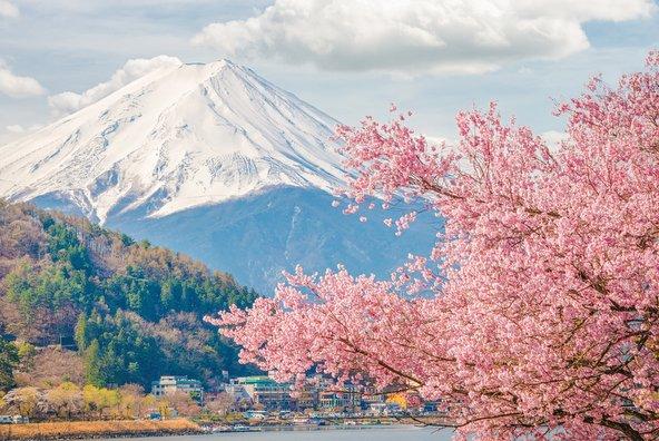 פריחת הדובדבן האביבית ביפן צילום: שאטרסטוק