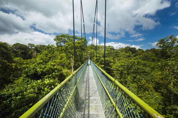 גשר תלוי בין צמרות העצים בשמורת מאקריצ'י