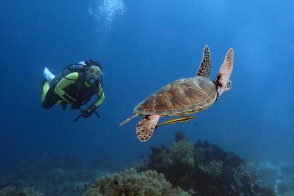 צלילה באי פנגלאו מזמנת מפגשים עם עולם תת ימי עשיר ומגוון