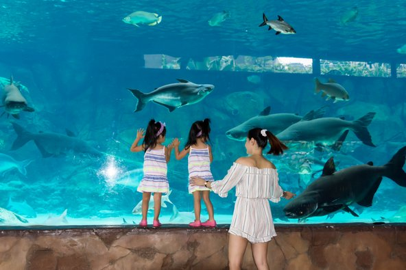 האקווריום של סינגפור, מהגדולים והמושקעים בעולם   צילום: Bill Roque / Shutterstock.com