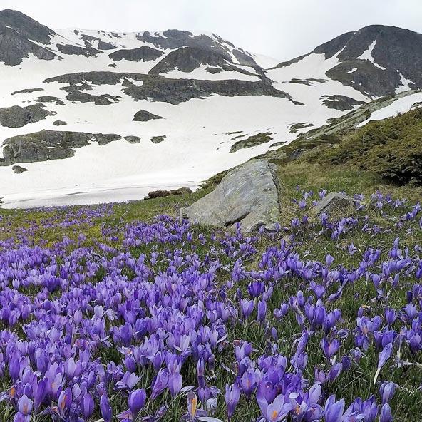 סגול ולבן, ניגודים מקסימים בהרי רילה בדרום בולגריה