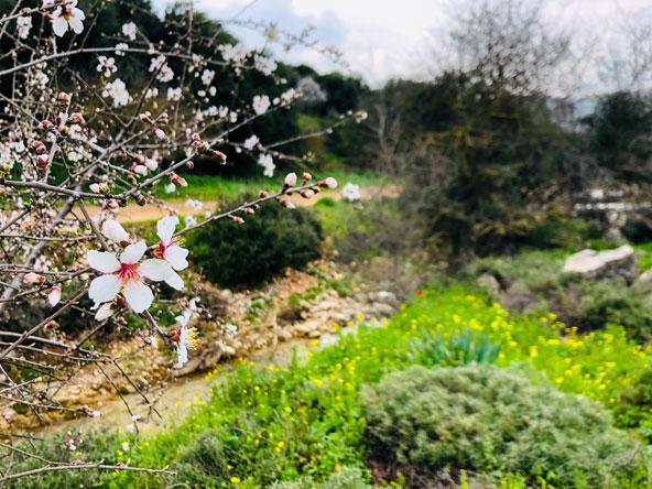פריחה אביבית בנחל דישון