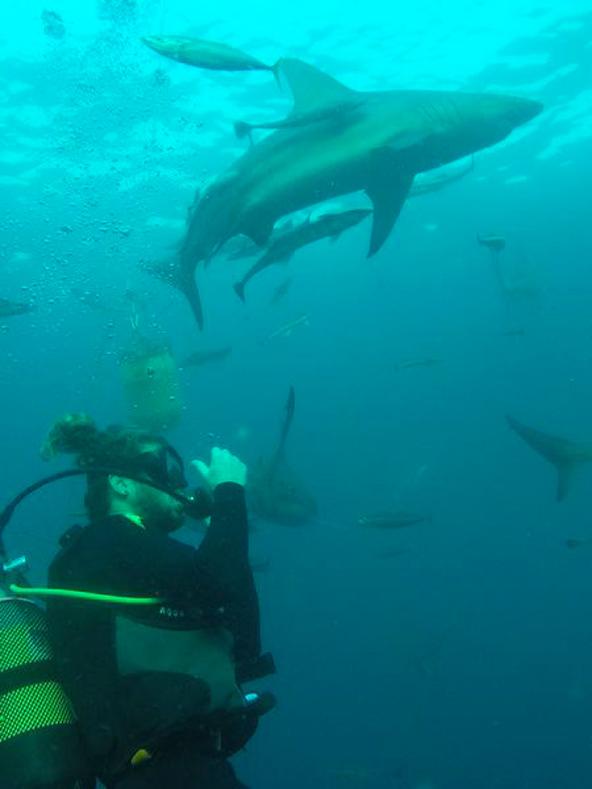 במהלך הצלילה חווים מפגשים מרגשים עם יצורים ימיים גדולים וקטנים | צילום: אופיר יהושפט