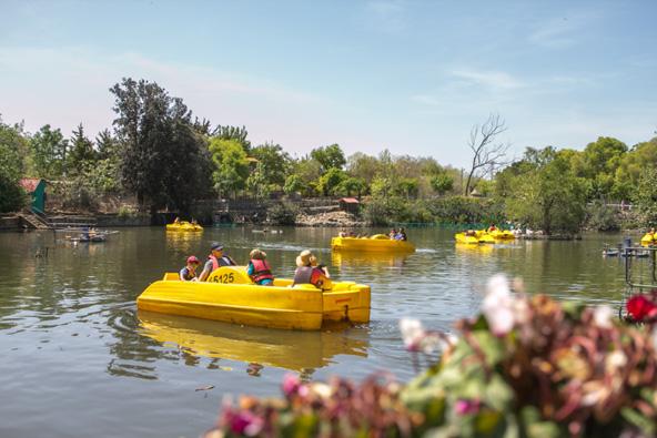 סירות פדלים באגם חי יראון