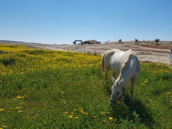 חוות מתנת מדבר. מרחבים מדבריים, פריחה וסוסים