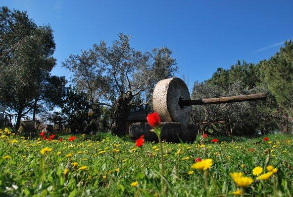 """חאן דרך התנ""""ך אל הטבע. מרחבים ירוקים, פריחה אביבית ומתקנים חקלאיים משוחזרים"""